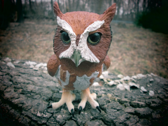 Safari Eastern Screech Owl