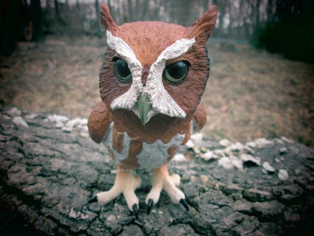 Safari Eastern Screech Owl